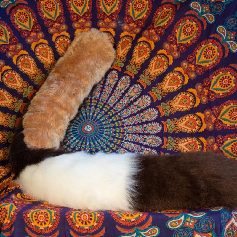 Finley Tail